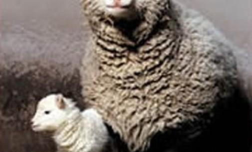 Animali clonati e destinati all'alimentazione