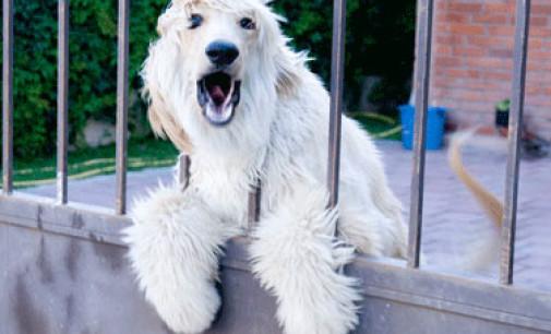 Il cane del vicino abbaia? Ecco i requisiti richiesti per la punibilità