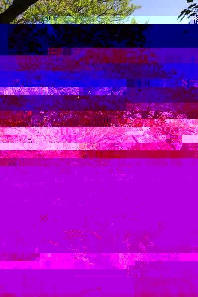 8794-Un-ontano-sul-Treja---