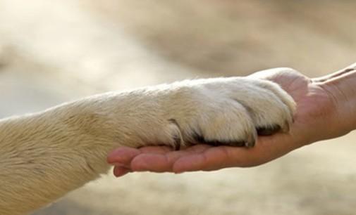 Giornata internazionale dei diritti animali