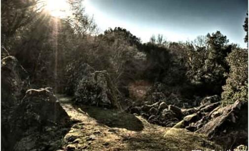 """""""Un bosco pieno misteri: il Sasseto di Torre Alfina"""""""