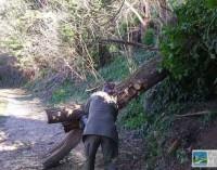 Parco del Treja – I guardiaparco liberano un sentiero da un albero caduto