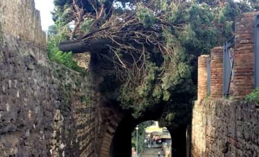 Maltempo a Pompei: cadono due alberi