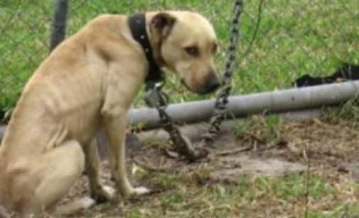 Il reato di abbandono di animali