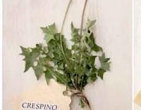 """Museo del fiore – """"L'insalata della nonna erbe spontanee mangerecce"""""""