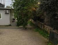 Pompei – Villa Arianna. Chiuso il sito per caduta albero su viale di ingresso