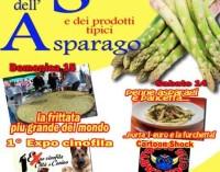 """Sagra dell'asparago """"mangiatutto"""" a Canino e festa sia!"""