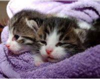 Nasce Dottor Bau & Dottor Miao, la prima mutua sanitaria per cani e gatti