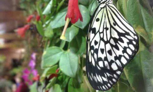 La Casa delle Farfalle. Un eden tropicale nel cuore della città