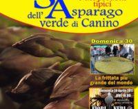 """Canino (VT) festeggia l'asparago, il """"mangiatutto"""" della Tuscia"""