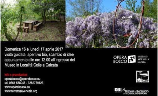 Calcata – Opera Bosco Museo di Arte nella Natura