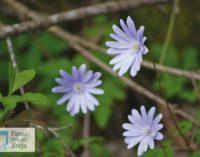 I fiori nella valle