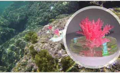 """ENEA mette """"in mare"""" le prime alghe artificiali"""
