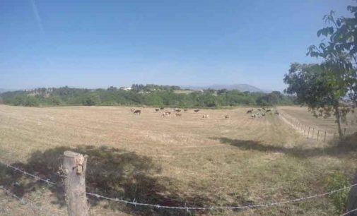 E' SOS per gli animali al pascolo e per l'agricoltura nel Lazio