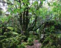 A passeggio tra gli alberi secolari del Sasseto