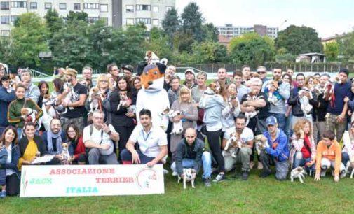 A Verona la finale di selezione per la nazionale Jack Russel Terrier Italia