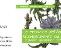 Le erbacce dell'Appia Antica