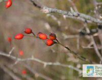 Parco Valle del Treja – Seconda giornata di riconoscimento di piante medicinali spontanee