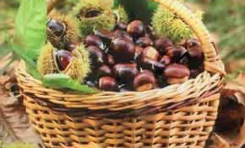 La castagna rossa del Cicolano protagonista della festa a Marcetelli