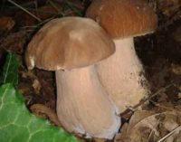 Raccolta funghi, cosa c'è da sapere