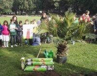Frascati, rubata la palma piantata nel Parco dell'Ombrellino