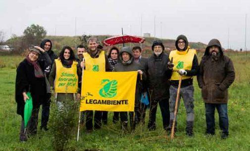 Nuovi alberi per la Riserva Naturale Laurentino-Acqua Acetosa