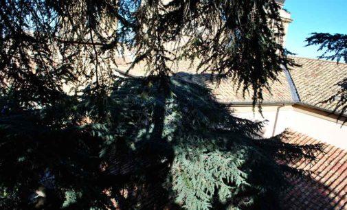Frascati, avviato il progetto di monitoraggio dei grandi cedri comunali