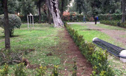 Frascati, avviato il ripristino delle perimetrazioni di bosso in Villa Torlonia