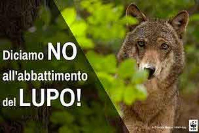 Piano Lupo, Il WWF chiede una rapida approvazione