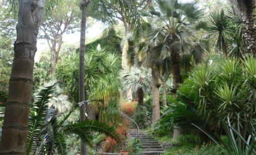 La bellezza e la gratuità in un giardino…