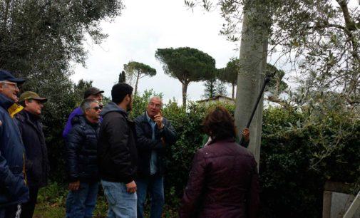 Velletri – Si ripete il corso di dimostrazione e formazione sulla potatura ulivi