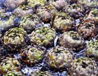 Il TOUR dei CARCIOFI alla MATTICELLA fa tappa  al Mercato Contadino di Ariccia