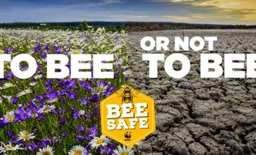 """WWF lancia """"bee safe"""", una campagna per salvare api e altri impollinatori"""