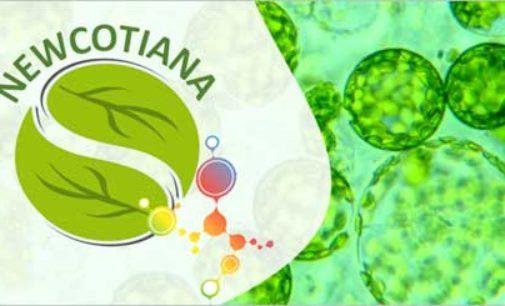 Ricerca: piante di tabacco come biofabbriche di farmaci e cosmetici