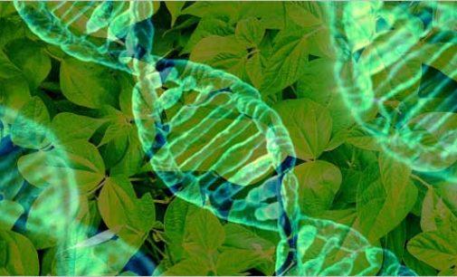 ENEA con Istituto Regina Elena per vaccini genetici contro tumori