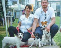in centinaia a mentana (rm) per il raduno dei jack russel terrier