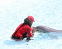 Domenico Modugno, un delfino nel cuore