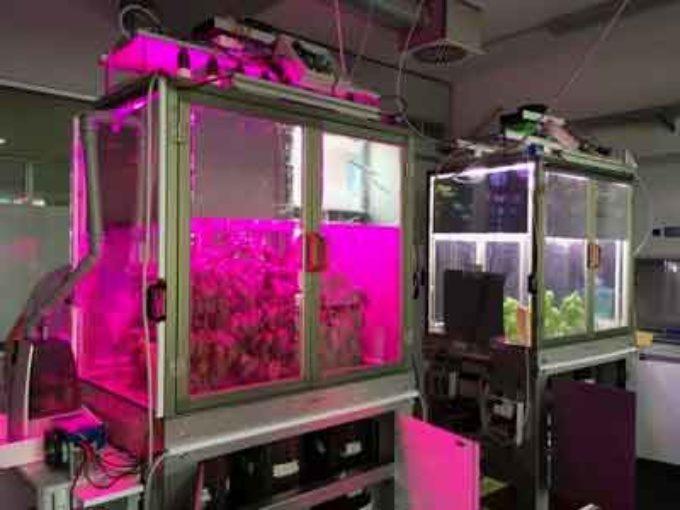 Agricoltura: ENEA realizza primo simulatore smart per coltivare piante al chiuso