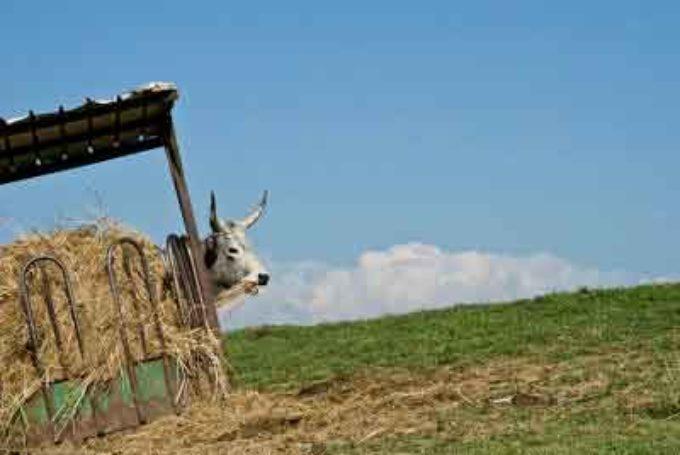 Agricoltura contadina e pastorizia ecologica