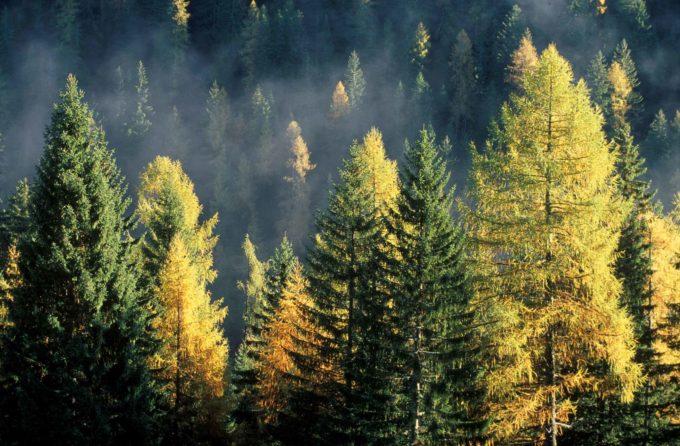 San Michele all'Adige – Risorse forestali, innovazione ed esperienze della ricerca per la loro gestione