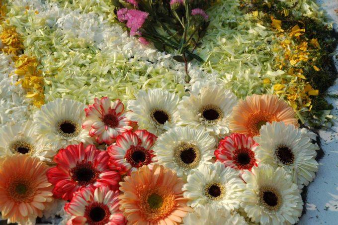 Città della Pieve diventa un quadro floreale
