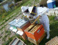 Alla FEM nasce la prima Carta per la tutela delle api prodotta dalla comunità scientifica italiana