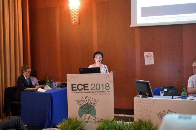 Drosophila suzukii, Gabriella Tait premiata al Congresso europeo di Entomologia