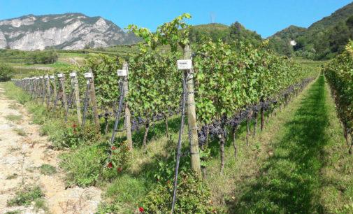 Riva del Garda ospiterà la 2 ^ edizione del congresso sulla biotremologia
