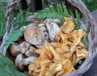 Parco dei castelli Romani – Funghi epigei: prodotti del sottobosco da non sottovalutare