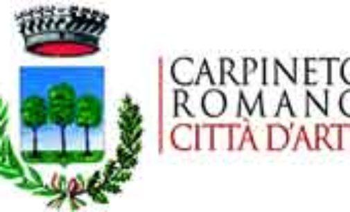 Carpineto – Cattura bovini inselvatichiti