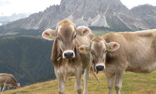 Cultura alimentare alpina, al via la candidatura a Patrimonio immateriale UNESCO