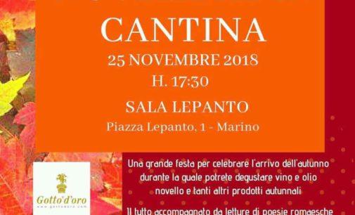 Marino – Novembre in cantina