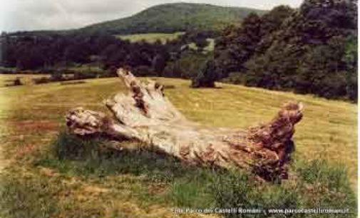 Il Parco e la gestione del territorio