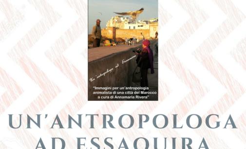 Mostra fotografica ed un libro per conoscere Essaouira, città dei gatti